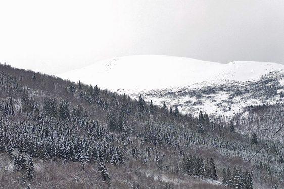 Skarven, Innfjorden
